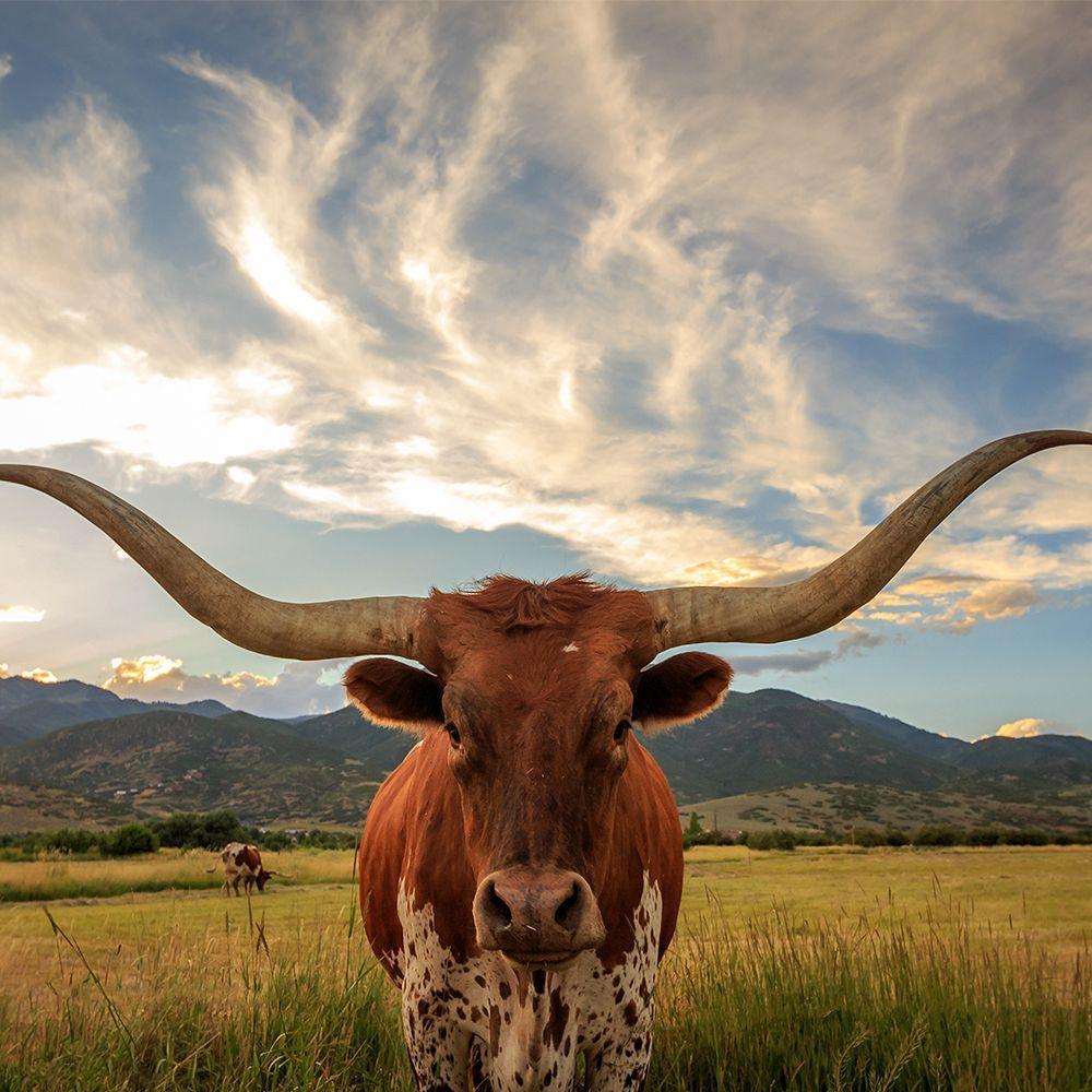 Is Health Insurance Mandatory in Texas?
